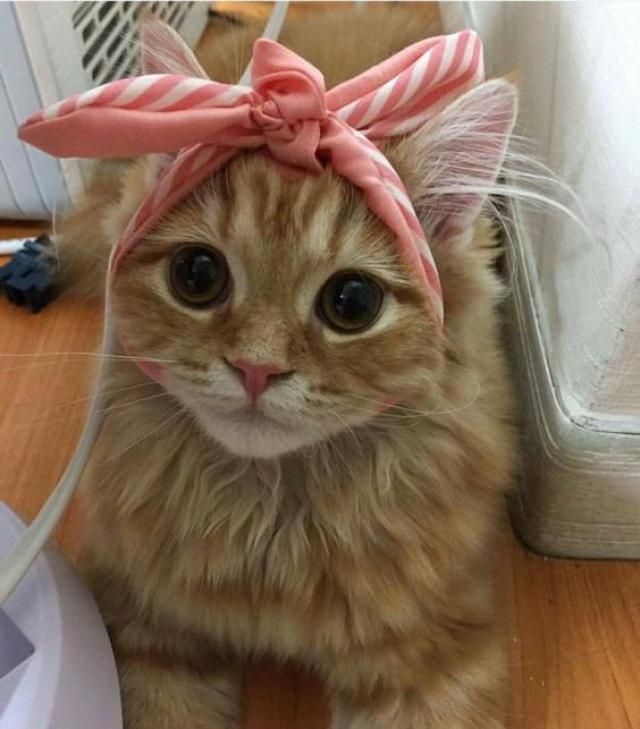 Mama Look at my new headbands!Is it cute huh?