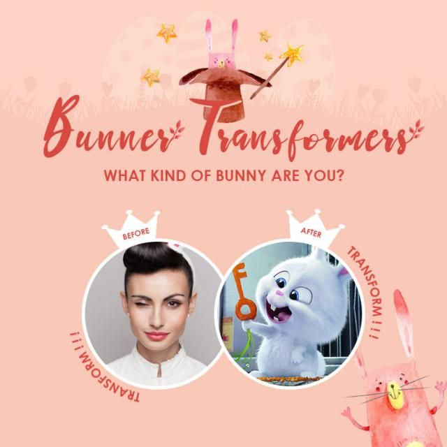 【Bunny Transformers】