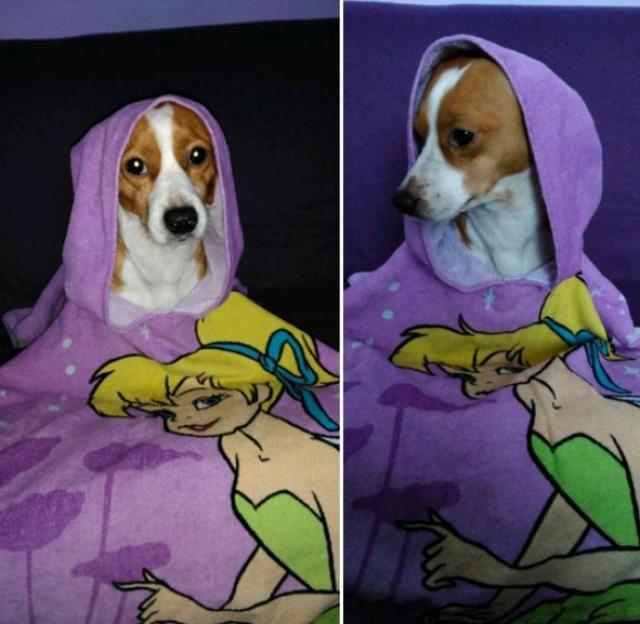 My beautiful Toto in a purple coat :)
