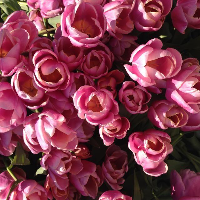 pink flowets