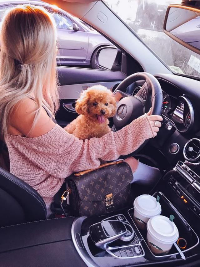 Going shopping with my dog. Do you have a pet? :)