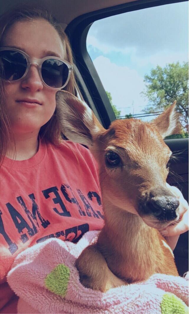 Saving a baby deer is