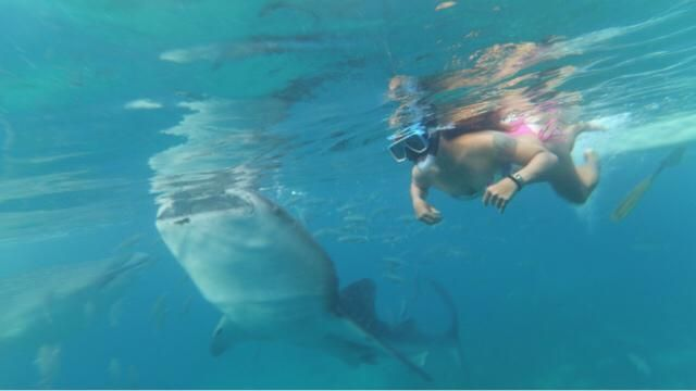 Here I am swimming in the deep blue sea with a whale shark.