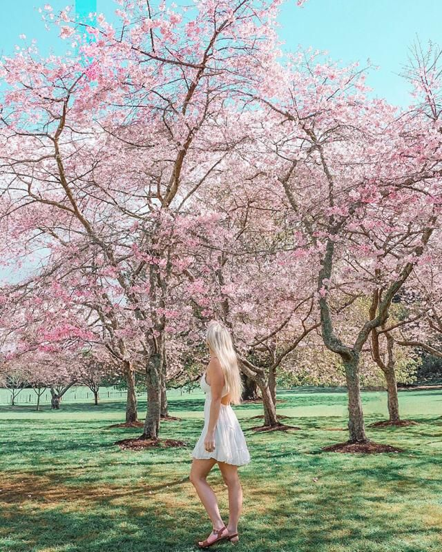Dancing under the cherry trees In Auckland in my favourite ZAFUL dress. This white dress is my go to when shoot…