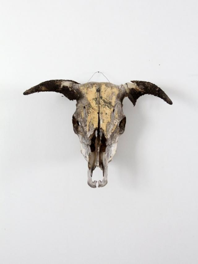 2019 Best Cow Skull Wall Art Images And Outfits | Z-Me ZAFUL