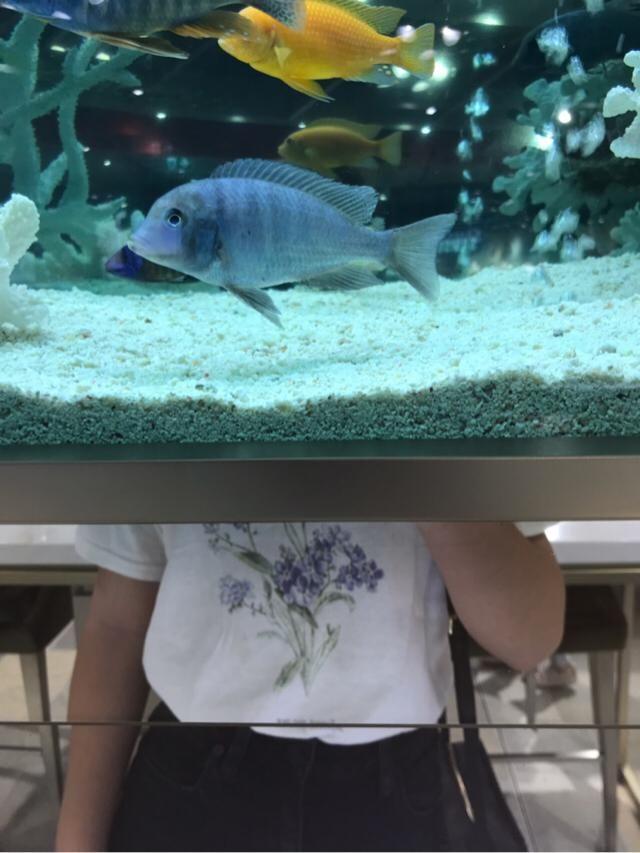 I love fishies