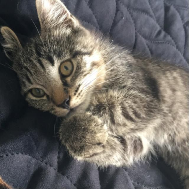 🤍This is my cat Zimba 🌊hope i win